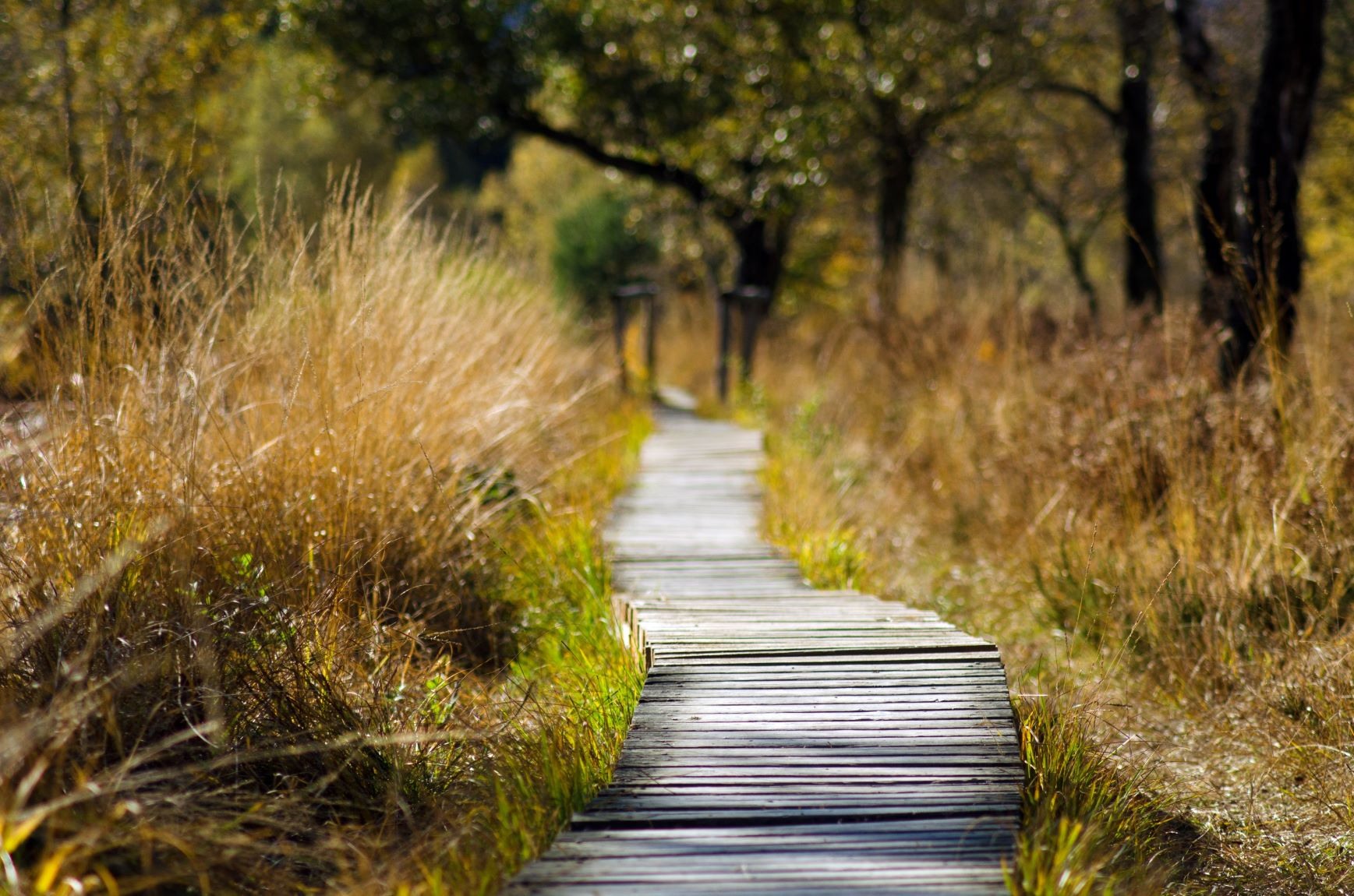 Which Financial Independence pathway is right for you?